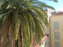 Appartement La Tour Cannes