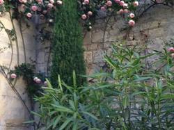 Les 3 Faucons Avignon