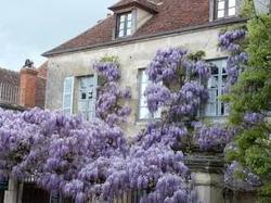 Sy Les Glycines Vézelay